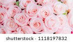 Stock photo panoramic cover banner background of beautiful pink rose soft tone nature background 1118197832