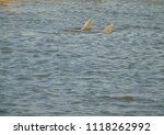 the fins of a couple of... | Shutterstock . vector #1118262992