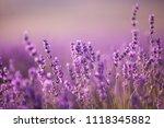sunset over a violet lavender... | Shutterstock . vector #1118345882