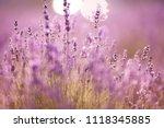 sunset over a violet lavender... | Shutterstock . vector #1118345885