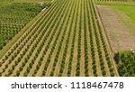 young trees cherry garden.... | Shutterstock . vector #1118467478
