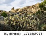 lava field trees and forest in... | Shutterstock . vector #1118569715