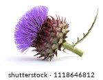 Artichoke Flower  Cynara...