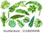 leaves of banana palm  liana... | Shutterstock . vector #1118650448