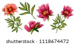 pink peony flower in a vector... | Shutterstock .eps vector #1118674472