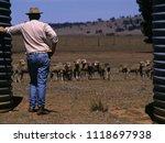 Drought In Australia Farmer...