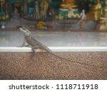 lizard living city | Shutterstock . vector #1118711918