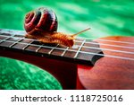 a beautiful big snail on the... | Shutterstock . vector #1118725016