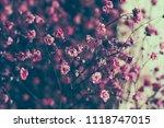 dry pink baby's breath flowers...   Shutterstock . vector #1118747015