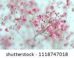 dry pink baby's breath flowers...   Shutterstock . vector #1118747018