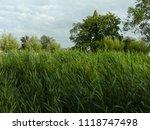 very high reed | Shutterstock . vector #1118747498