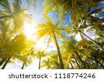 coconut trees  looking up... | Shutterstock . vector #1118774246