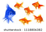 Small photo of standing out of the crowd concept with individual successful goldfish