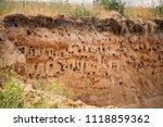 european sand martin active... | Shutterstock . vector #1118859362