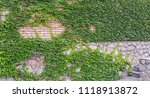 leaves of ivy covering the... | Shutterstock . vector #1118913872