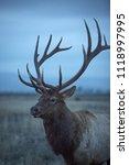 Montana Bull Elk