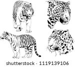 set of vector drawings on the... | Shutterstock .eps vector #1119139106