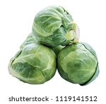 brussels sprouts isolated on... | Shutterstock . vector #1119141512