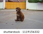 Small photo of hybrid dog, devalue of purebred