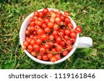 fresh red currant in a white cup | Shutterstock . vector #1119161846