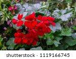a beautiful multi colored... | Shutterstock . vector #1119166745