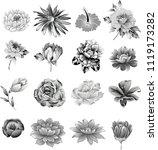 set of grey flower   Shutterstock .eps vector #1119173282