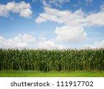 Corn Field Against Cloudy Sky...