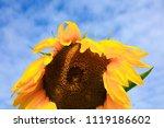 close   up of a sunflower under ... | Shutterstock . vector #1119186602