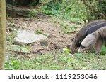anteater in forest | Shutterstock . vector #1119253046
