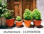 fresh basil in orange pots | Shutterstock . vector #1119365036