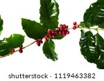 red coffee beans on a branch of ... | Shutterstock . vector #1119463382