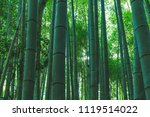 background of bamboo forest in... | Shutterstock . vector #1119514022