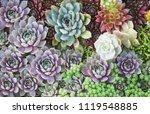 arrangement of succulents or... | Shutterstock . vector #1119548885
