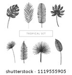 tropical leaf collection.... | Shutterstock .eps vector #1119555905
