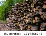 choped off trees lay in pile on ...   Shutterstock . vector #1119566348