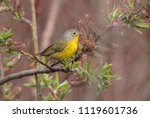 closeup of a colorful migratory ... | Shutterstock . vector #1119601736