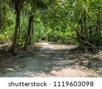 jungle and the path at sunny... | Shutterstock . vector #1119603098