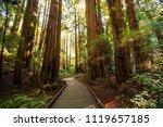 muir woods national monument... | Shutterstock . vector #1119657185