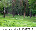 beautiful trees and green grass | Shutterstock . vector #1119677912
