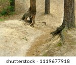 a dirt bike path in the forest | Shutterstock . vector #1119677918