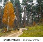 very beautiful autumn forest. | Shutterstock . vector #1119677942