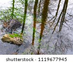 beautiful reflection of trees... | Shutterstock . vector #1119677945