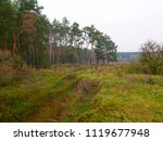 autumn. field and pine forest | Shutterstock . vector #1119677948