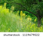 beautiful green grass and trees ... | Shutterstock . vector #1119679022