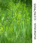 beautiful spring field flowers | Shutterstock . vector #1119679055