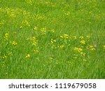 beautiful spring field flowers | Shutterstock . vector #1119679058
