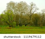 beautiful forest in early spring | Shutterstock . vector #1119679112