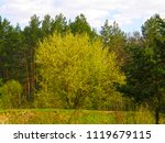 beautiful green spring forest | Shutterstock . vector #1119679115