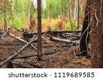 burnt charred fallen trees...   Shutterstock . vector #1119689585