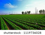 rows of peanut fields | Shutterstock . vector #1119736028